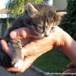 Urgent, 3 chatons à donner