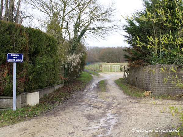 Chemin des Vieilles vignes