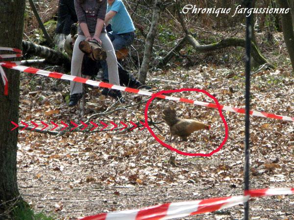 LA poule de la chasse aux oeufs 2011