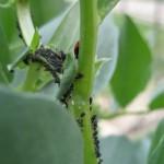 Réduits en esclavage par marâtres fourmis ; la colonisation, ses lois, tout était dit ...