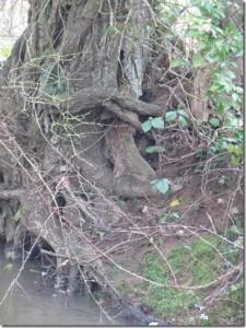 nain geigneur des eaux et forêts  1