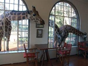 Manoir aux girafes